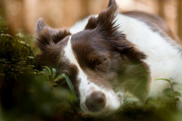 Můj psí hluchoun: Adina, dohazovačka pochybných existencí