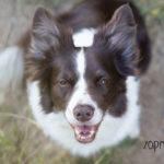 Můj psí hluchoun: Hledáním ke štíhlé postavě